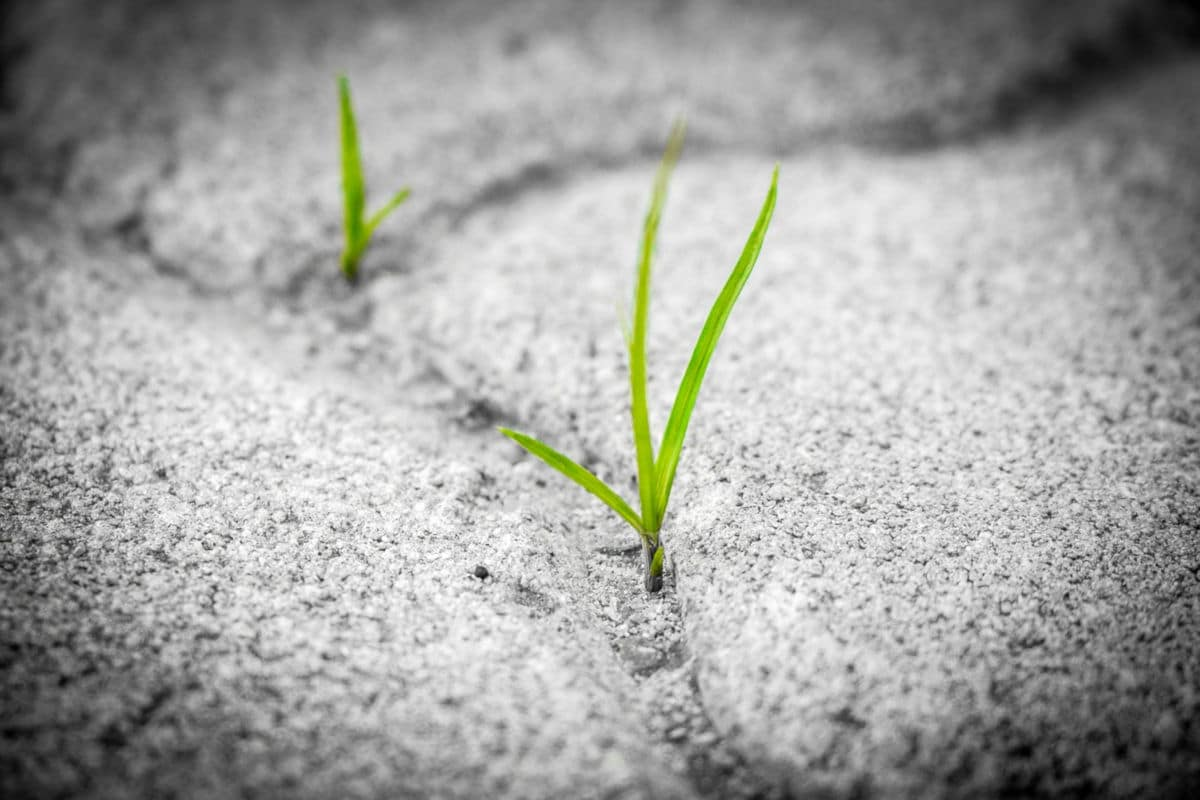 Grass - persistence